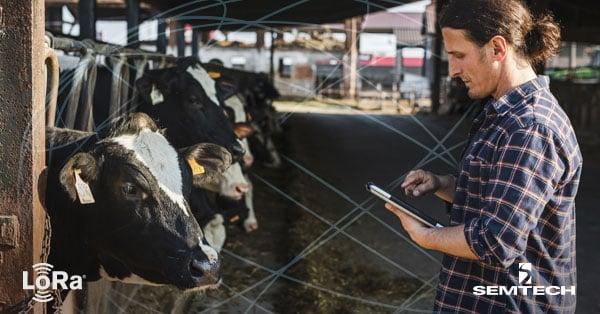 Cow-Ag_BLOG2